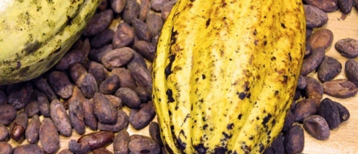 Kakaoohnen